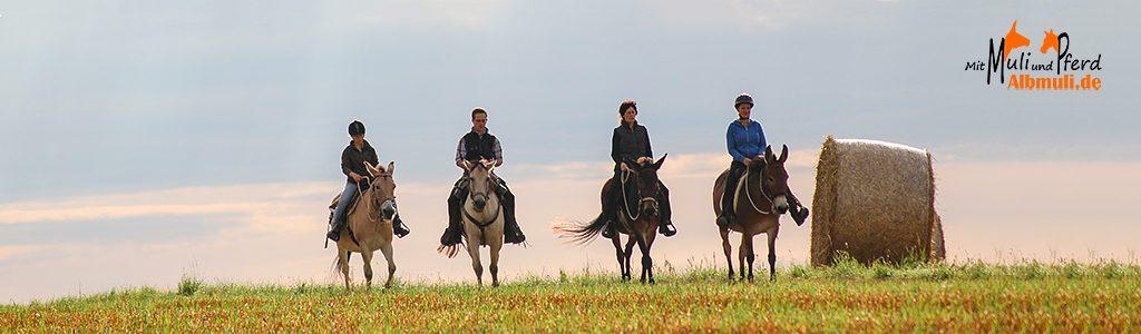 Albmuli- Wanderreiten mit Maultieren und Pferden