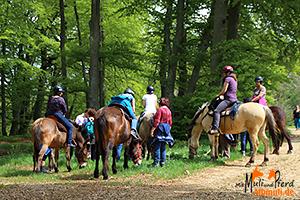 Trekkingpause mit Maultieren und Pferd